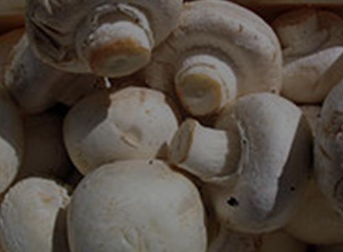 Musroom-img
